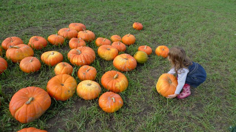 Pumpkin2011_5