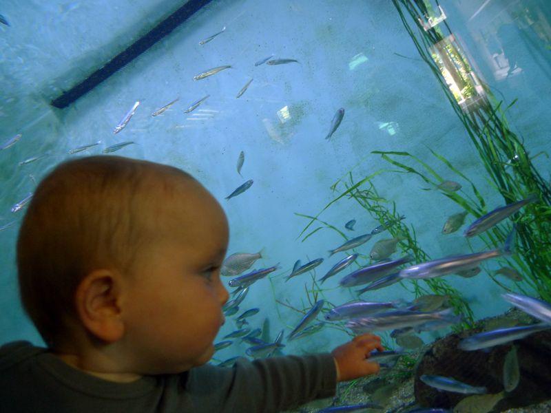 AquariumSalishan