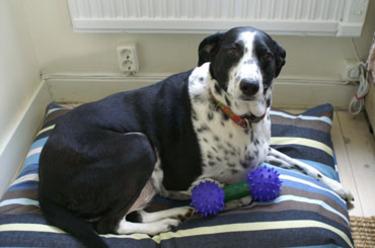 Newbedtdog